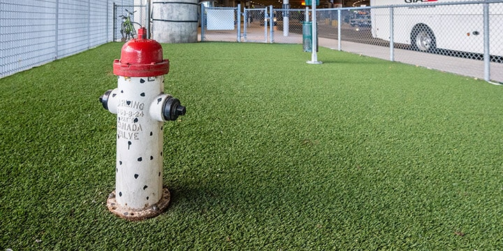 Fire hydrant on artificial grass in fenced in Pet Relief Zone.