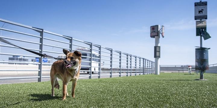 Dog in outdoor pet relief area